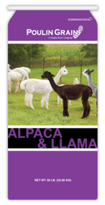 AlpacaLlama-Thumb